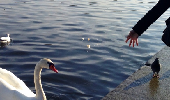 I was busy feeding these 3 hungry birds in Vltava, Prague, Czech Republic