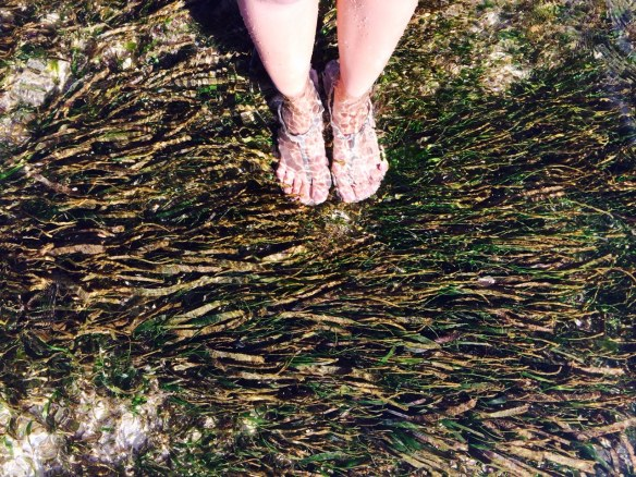 Sea grasses are not disgusting to be felt on your feet!